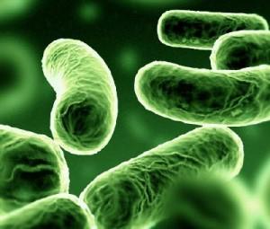 probiotik probiotic 4Life