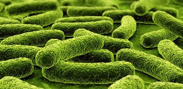 Probiotik: Bakteria Yang Baik Untuk Anda